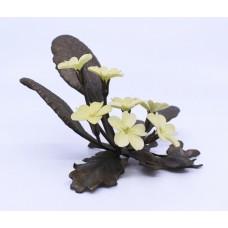 Albany Flower Series Primrose