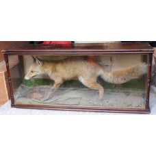 Antique Cased Taxidermy Fox & Pheasant
