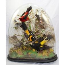 Antique Domed Taxidermy Bird Arrangement